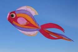 Exotic Butterfly Fish Windsock