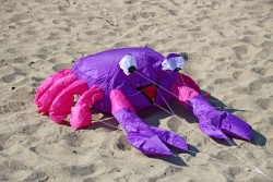 Bouncing Buddy Billy the Crab purple