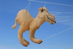 Camel 1.6m