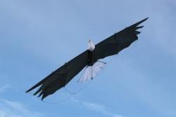 Revolution Eagle