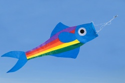 Windsock Fish blue