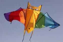 Fledermaus rainbow