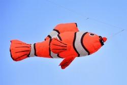 Lucky Fish orange