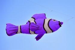 Lucky Fish purple