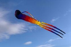 Midi Trilobite rainbow