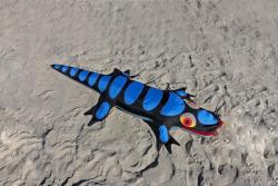 Lizard Sandimal black