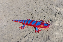 Lizard Sandimal red