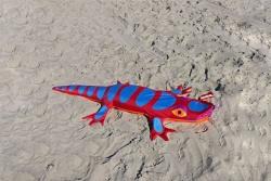 Lizard Sandimal rot