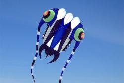 Trilobite Kite 7 blau-schwarz