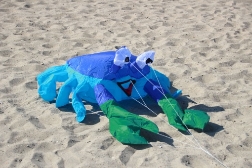 Bouncing Buddy Billy the Crab blue/green