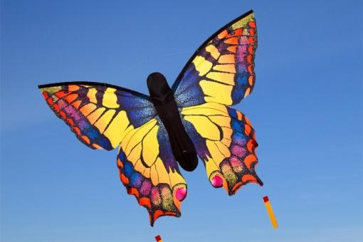 Butterfly Swallowtail R