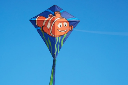 Eddy Clownfish