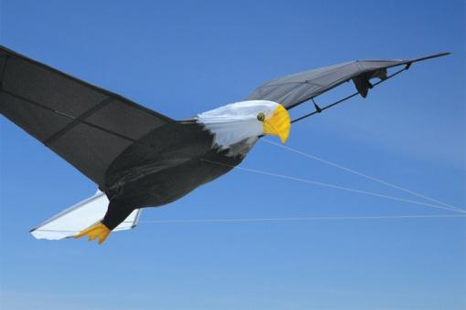 Giant Bald Eagle