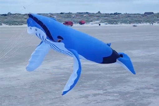Midi Humpback Whale 8m light blue