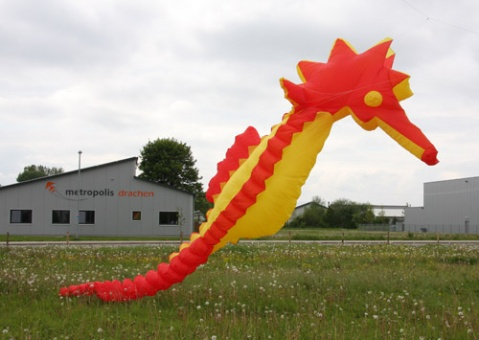 Sea horse 10m