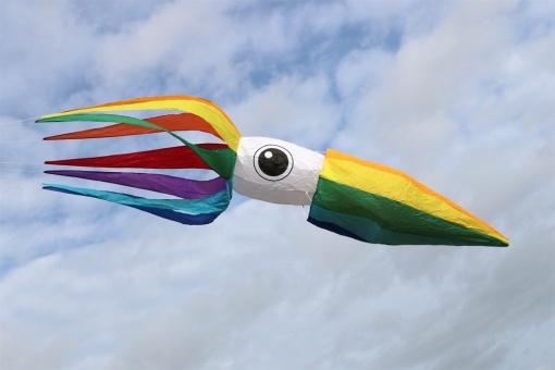 Squid rainbow