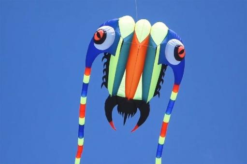 Trilobite Kite 10 blau – grün