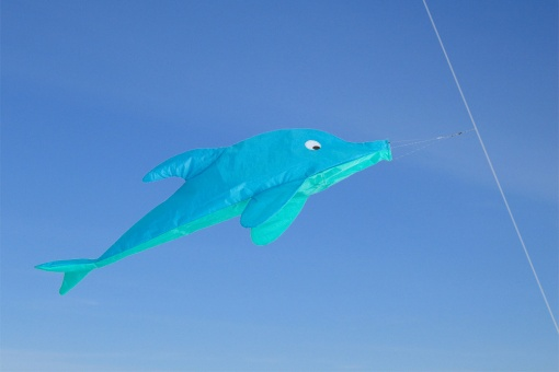 Windsock Dolphin