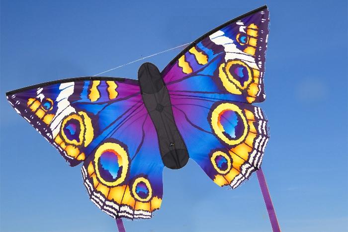 Butterfly Buckeye L