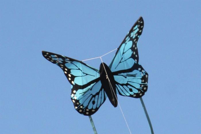 Bella Butterfly blue