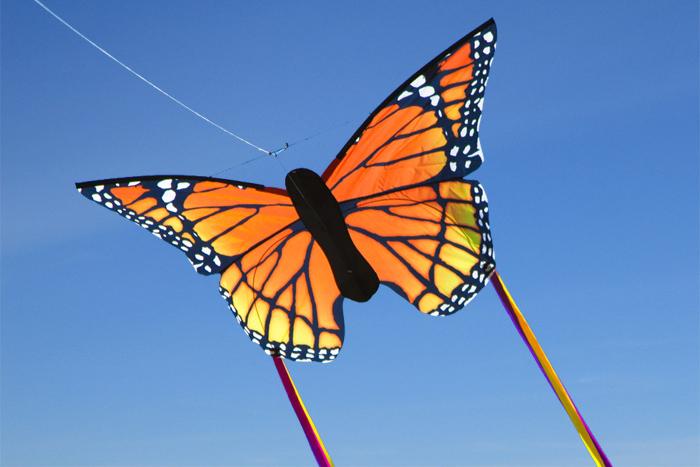 Butterfly Monarch L