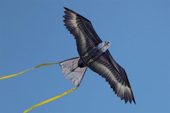 WindNSun Eagle
