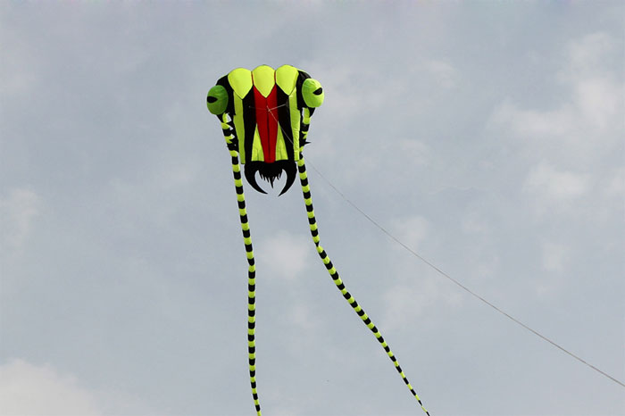 Trilobite Kite 2 green-black