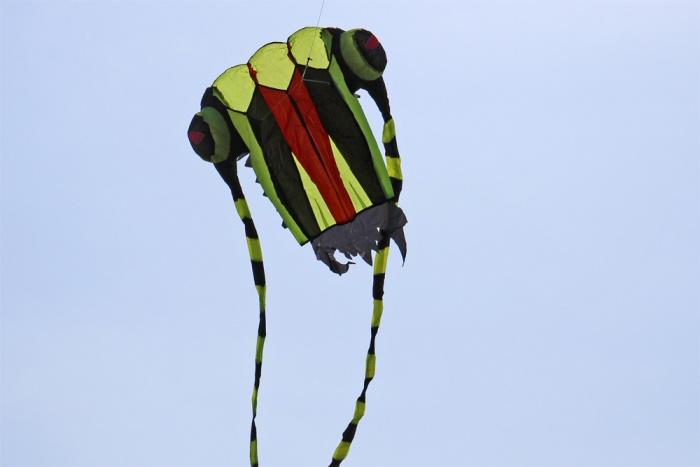 Trilobite Kite mini