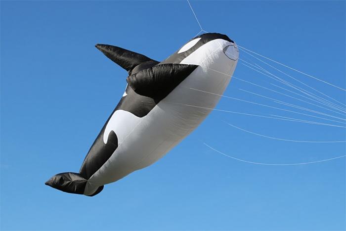 Whale 10m