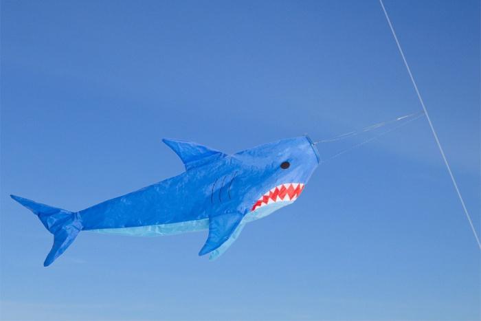 Windsack Shark