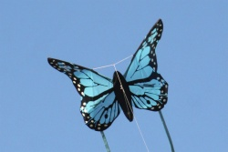 Bella Butterfly blue
