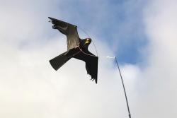 Vogelschreck Set CFK 6m