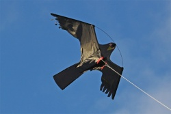 Bird Kite CFK