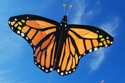 Giant Monarch Butterfly Kite