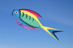 Rainbow Surgeon Fisch Windsack