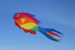 Rainbow Wrasse Fisch Windsack