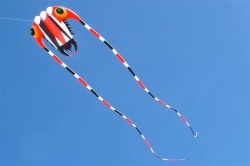 Trilobite Kite 7 rot