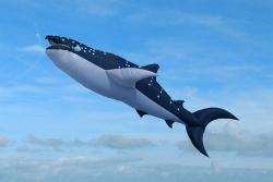 Midi Whale Shark 6m