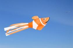 Windsock Clownfish