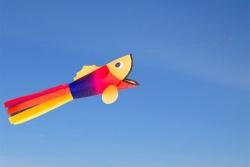 Windsock Little Rainbow Fish