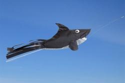Windsock Sharky